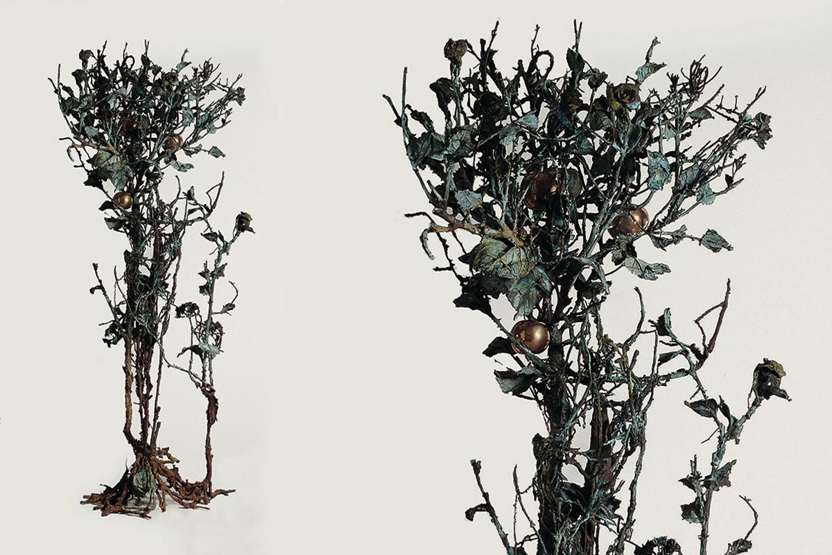 01-albero-adriana